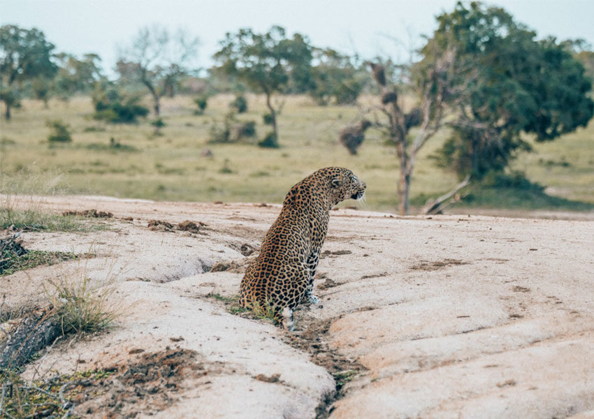 South African Lodge Specials Kruger